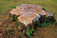 tree doc stump removal