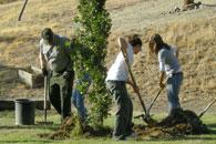 tree doc tree planting
