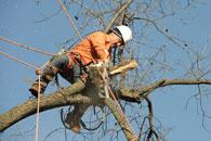 tree doc tree removal